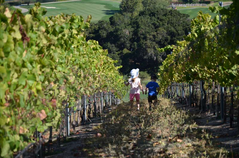 carmel-valley-ranch-vineyard